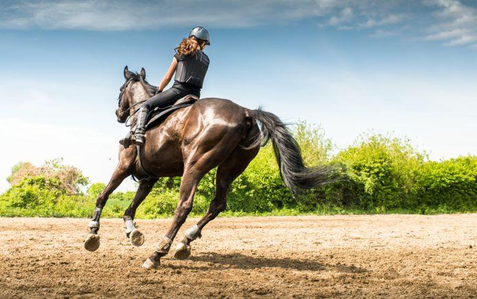 1_shutterstock_Riding_Horse_365215922.jpg