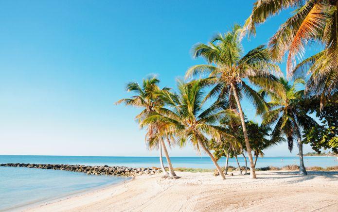 dreamstime_12332638_key_west_beach_palm_trees (1).jpg