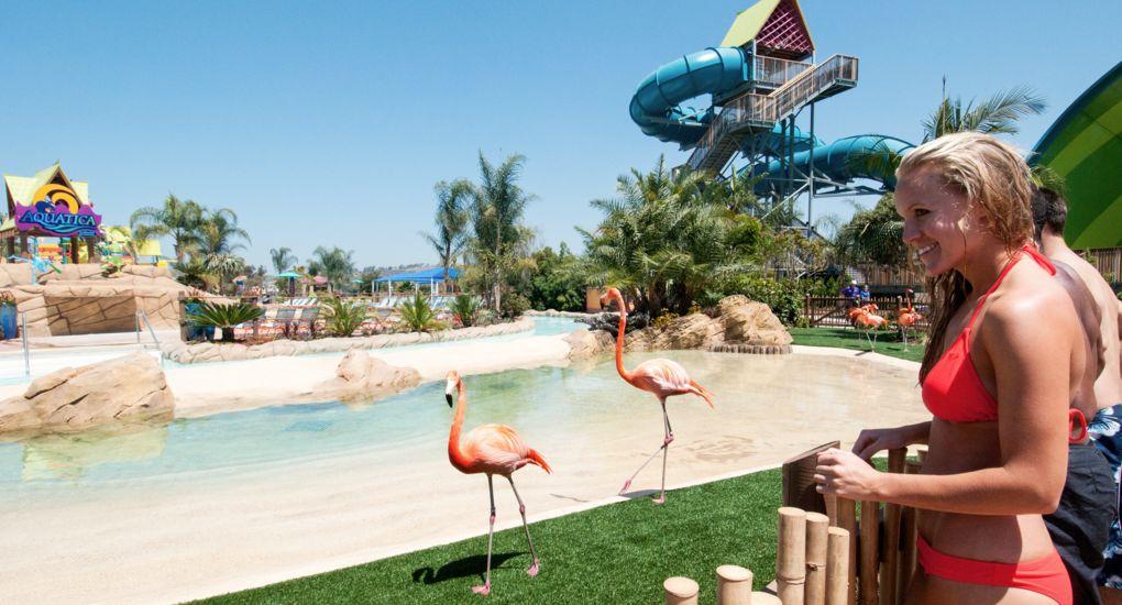 1-Aquatica-Seaworld-San-Diego-Flamingo.jpg